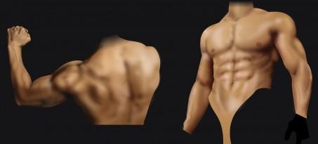 筋肉を描く練習