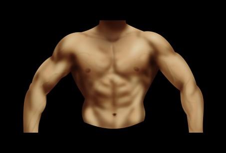 筋肉を描く練習②